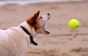 veterinär hund lek med boll