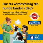 Märsta veterinar praktik gratis tandkontroll